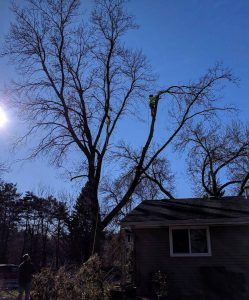 Tree Trimming And Removal Klean Companies